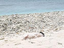 砂浜ビキニ