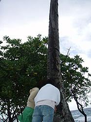 ジープ島のやしの木